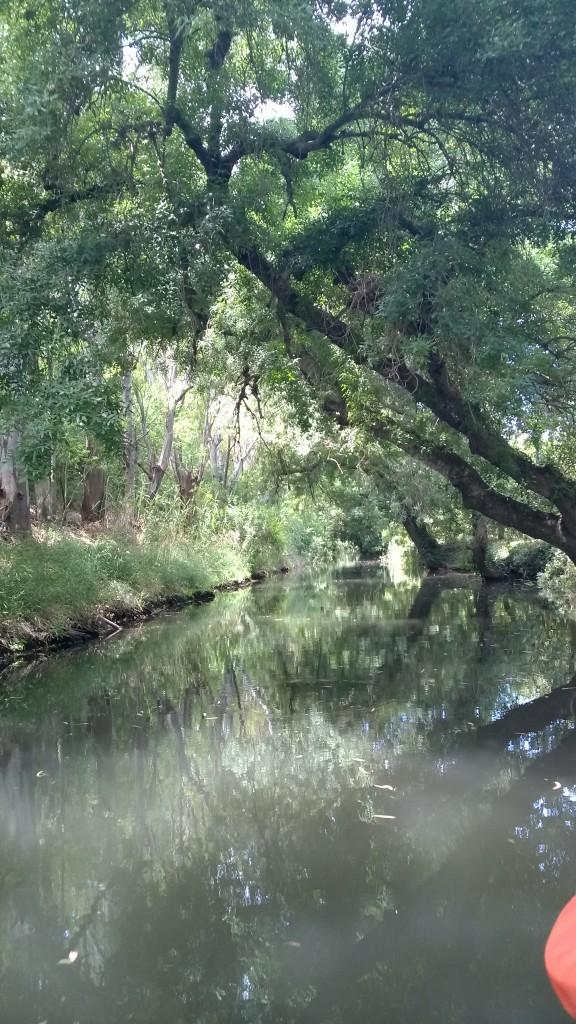 Il corso del fiume Ciane - Siracusa